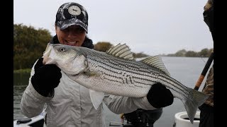 Drifting Live Bait For Ca. Delta Striped Bass w/ Right Hook Sportfishing