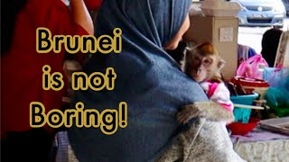 BRUNEI IS NOT BORING! Exploring one of the world's least visited countries and loving it!
