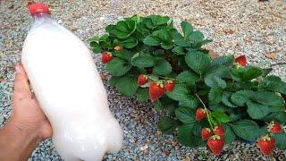 Adubo Orgânico Natural que faz sua Planta Desenvolver Rápido
