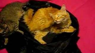Twix attacks a leather jacket 2