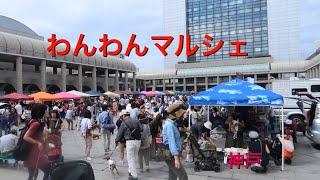 9/23〜24と神戸でわんわんマルシェが開催、ひーくんも参加で行って来ま...