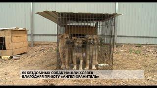 60 бездомных собак нашли хозяев благодаря приюту «Ангел хранитель»