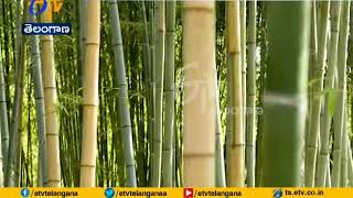 Cabinet Approves Restructured | National Bamboo Mission