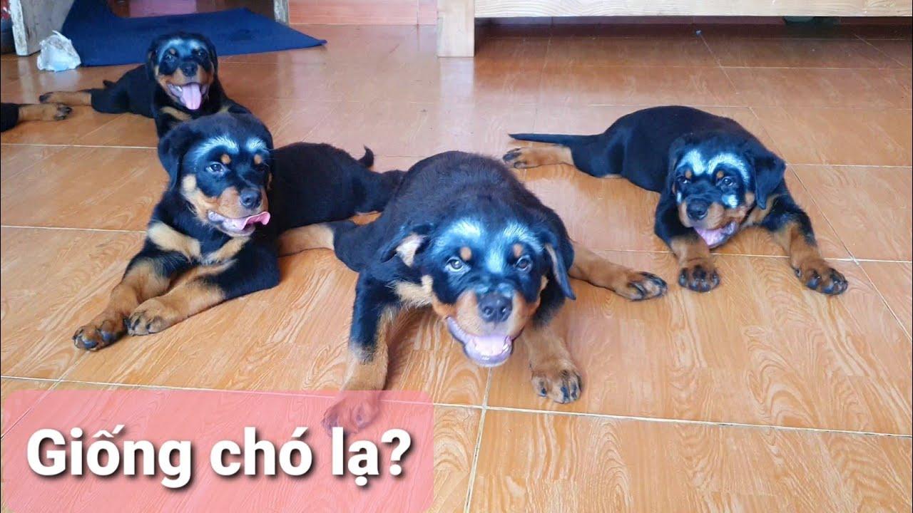 Cute dog funny có 102 chó con dễ thương mấy triệu lượt xem