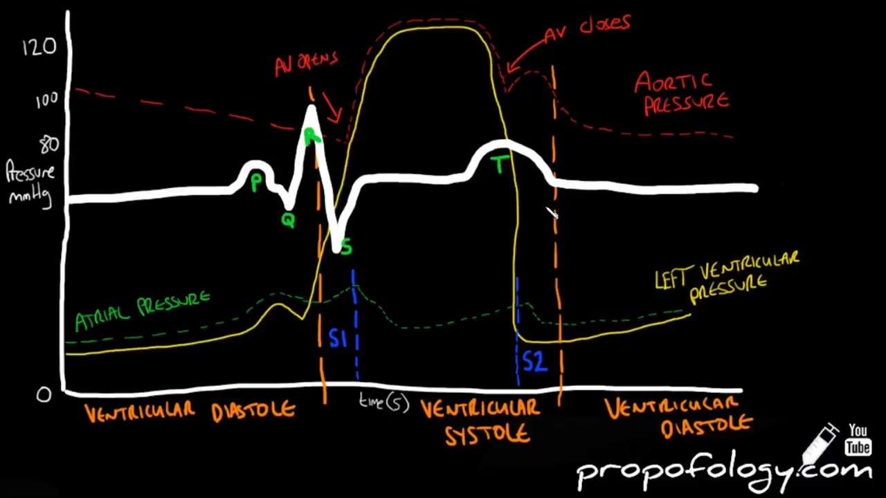 Cardiac Cycle In 3 Minutes Physiology