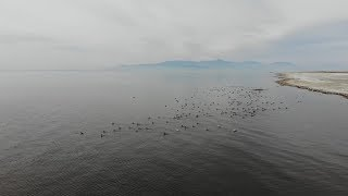 Change At The Salton Sea Is Affecting Bird Populations