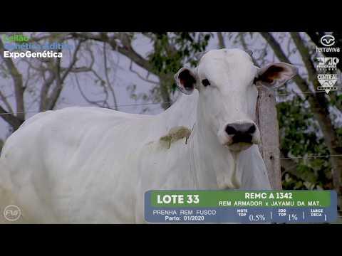 LOTE 33 - Leilão Genética Aditiva ExpoGenética 2019