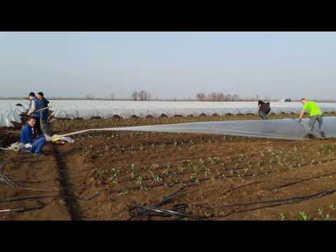 Высадка ранней капусты в Херсонской области!