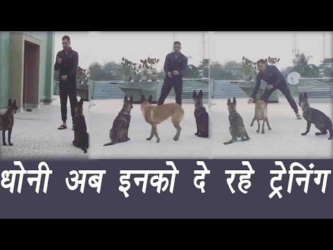MS Dhoni trains his pet dogs with tennis ball, watch video| वनइंडिया हिन्दी