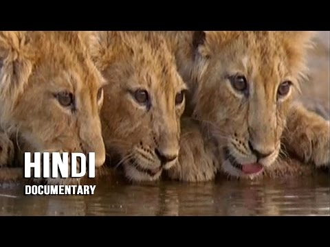 Gir Forest National Park - Hindi Documentary