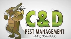 Pest Control Services Halethorpe MD (443) 354-8805