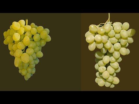 Виноград Аркадия и виноград Лора-Флора, полив винограда