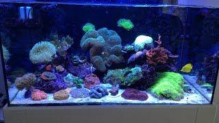 Reef Aquarium Salt Water Deniz Akvaryumu Tanıtımı