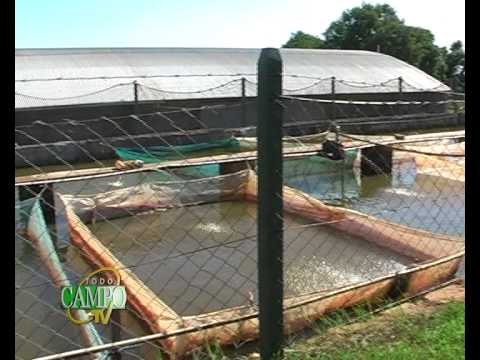 Cr a de peces una excelente opci n youtube for Piscina de peces