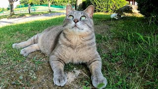 ヤバい先輩猫が寝ていたのでそ~と通り過ぎる公園の猫