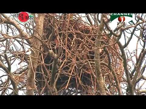 Nature and Life - Episode 186 (Diverse Birds' Nest)