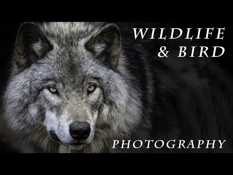WILDLIFE & BIRD Photography - From your Car