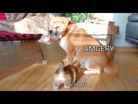 AMGERY ALERT!