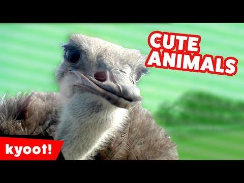 Funniest Pet & Animal Clips & Bloopers of October 2016, Week 2   Kyoot Animals