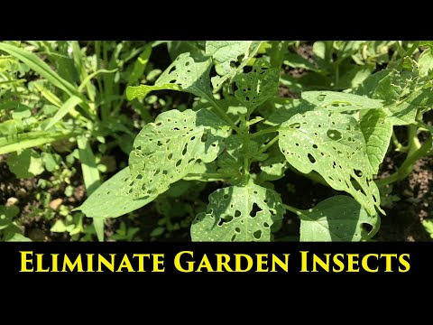 eliminate-insects-in-the-garden-with-bug-b-gon