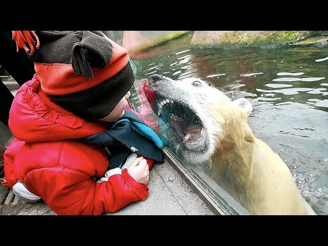 Zoo Animal Attacks ★ When Dangerous Animals Don't Know What Glass Is! [Funny Pets]