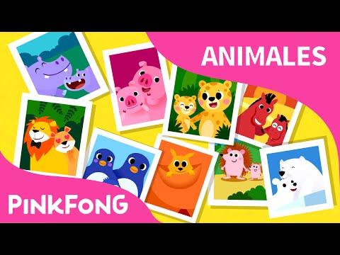 Familias de Animales | Animales | PINKFONG Canciones Infantiles