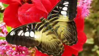 Урок бабочки Мудрость и Терпение к другим