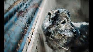 Полсотни собак заживо сгорели в приюте для животных