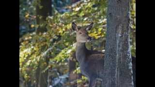 Mes chasses photos 2012.wmv