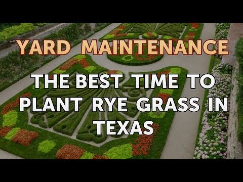 The Best Time To Plant Rye Grass In Texas