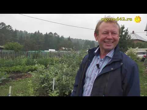 Вопрос: Как называется стелющаяся яблоня и где растет?