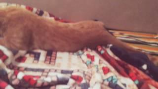 Что делает кошка утром???