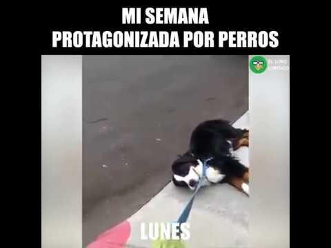 MI SEMANA PROTAGONIZADA POR PERROS (Official)