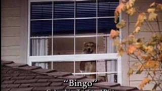 Video Bingo 1991 Trailer download MP3, 3GP, MP4, WEBM, AVI, FLV Agustus 2018