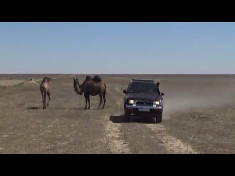 El Mar de Aral en Asia Central se reconecta con el agua y la vida
