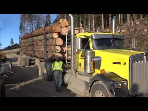 A Nice Day For A Log Truck Ride