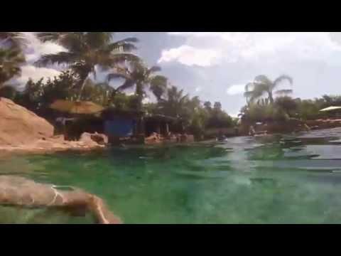 Discovery Cove   Disney 2014 Parte 2