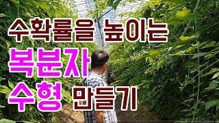 [유기농 복분자 수형 …