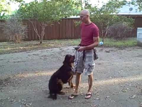 Dog Training Flower Mound
