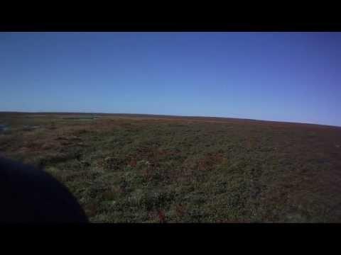 Ptarmigan Hunting In Newfoundland