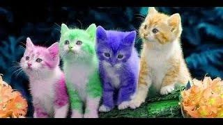 Смешные коты 11 (Funny Cats 2016)