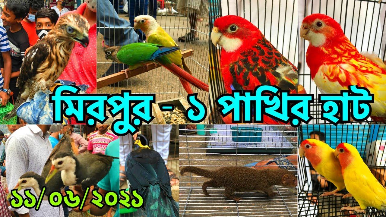 বৃষ্টি ভেজা দিনে জমজমাট মিরপুর - ১ পাখির হাট   পাখির বাজার দর জানুন   Mirpur - 1 Bird Market (V/280)