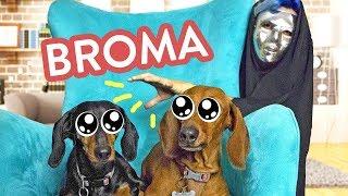 BROMAS PARA MASCOTAS | ARIA Y KLER | BROMAS LOS POLINESIOS