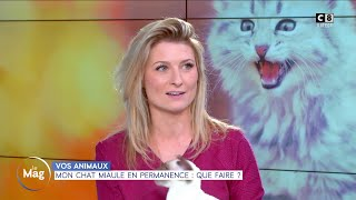 Mon chat miaule en permanence : que faire ?