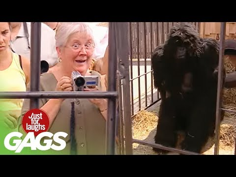 Gorilla Attack - Just For Laughs Gags