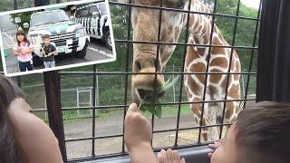 サファリパーク キッズパトロール体験 キリンにエサあげたよ♫  動物園 おでかけ Fuji Safari park Zoo thumbnail