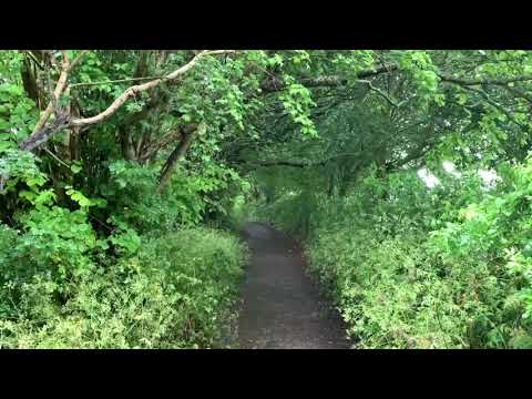 Rainy Day Path in Glastonbury | Gentle Rain Falling Through the Leaves | Soothing Sounds for Sleep from YouTube · Duration:  3 hours 33 seconds