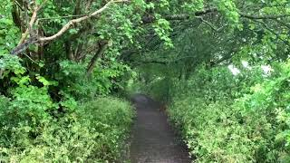 Rainy Day Path In Glastonbury | Gentle Rain Falling Through The Leaves | Soothing Sounds For Sleep