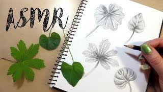 Drawing Leaves || ASMR Pencil Drawing Sounds  - No Talking || One Hour