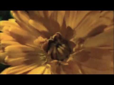 Lasa florile sa cante